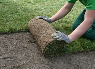 Man Laying Down Grass - Landscape Installation